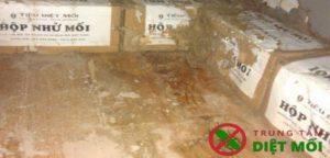 Thuyết minh phòng chống mối cho công trình xây mới nhà cửa